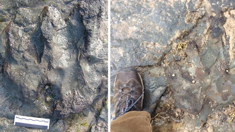 Vandalen zerschlagen 115 Millionen Jahre alten Dinosaurier-Fußabdruck mit Hammer