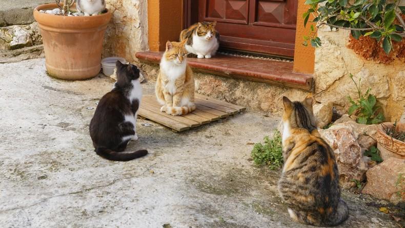 Willkommen im Dorf der Katzen: Bungalows für feline Vierbeiner in der Türkei geplant