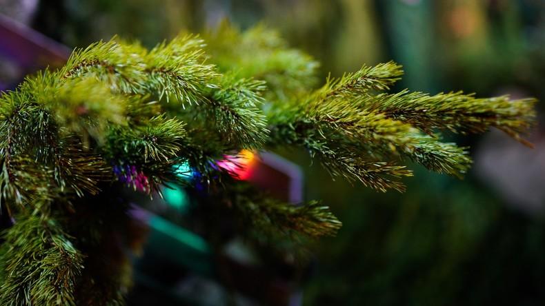 Bitte bis zum nächsten Weihnachtsfest aufbewahren: Familie schmückt Waldkiefer seit 34 Jahren