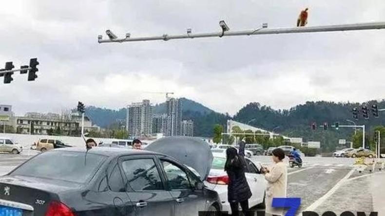 Frau in China verwechselt Hinterteil eines Affen mit rotem Licht und verursacht Verkehrsunfall