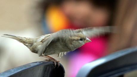 Geflügelter Passagier: Reiselustiger Sperling lässt US-Flugzeug zurückfliegen (Symbolbild)