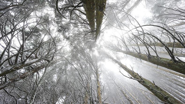 Zwei elfjährige Jungen verlaufen sich im Ural-Wald und überleben kalte Nacht unter freiem Himmel