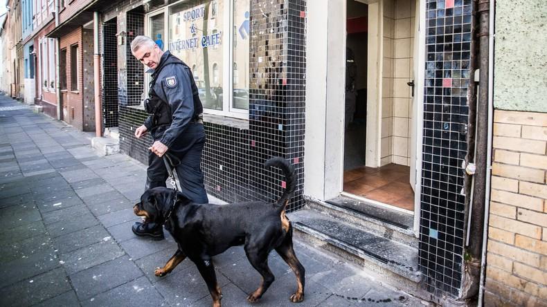 Studie: Hunde können DNA riechen - Ergebnisse sollen vor Gericht standhalten