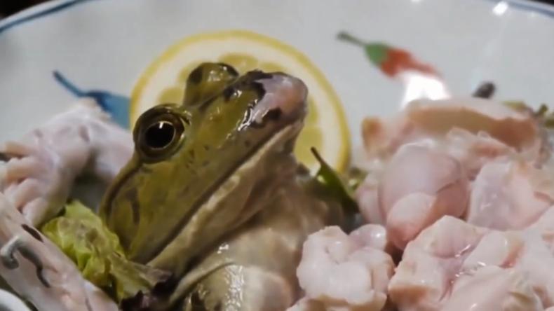 Nichts für schwache Nerven: Fisch und Frosch mal anders serviert und gegessen (18+)