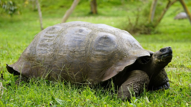 37 Jahre alter Amerikaner verhaftet, da seine Mutter ihm verbietet, seltene Schildkröte zu behalten