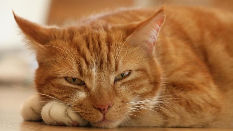 Dolce vita: Katze erbt 30.000 Euro in Italien
