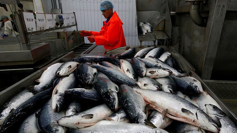Nach Verlust des russischen Marktes: Norwegen verliert eine Milliarde US-Dollar bei Fischexport