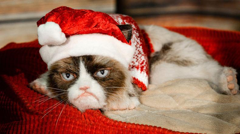 Wertvoller Miesepeter: Grumpy Cats Frauchen gewinnt Rechtsstreit über 700.000 US-Dollar
