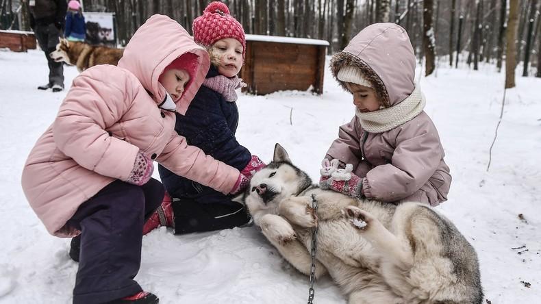 Alljährliche Husky-Therapie für Groß und Klein startete in Moskauer Sokolniki-Park