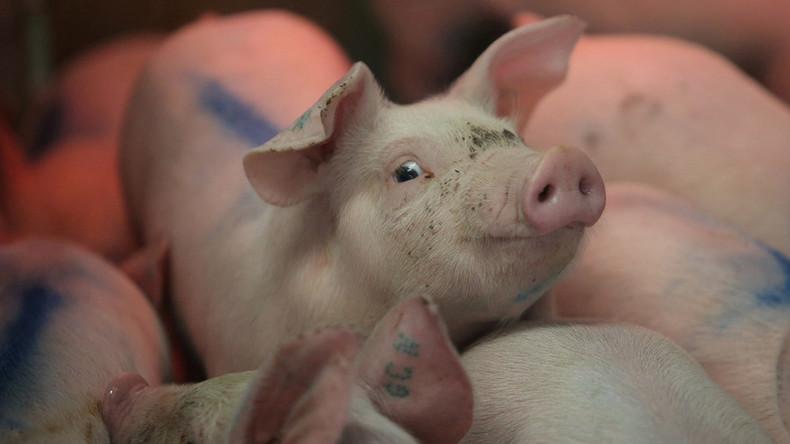 """""""Mörder und Vergewaltiger"""": Bauern erhalten Drohungen von Veganern"""
