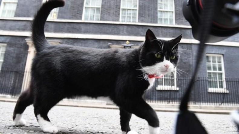 Britisches Außenamt verbietet Mitarbeitern, den offiziellen Mäusefänger zu füttern