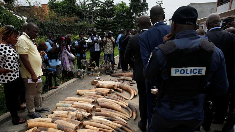 Einer der weltweit führenden Elfenbein-Forscher in Kenia ermordet