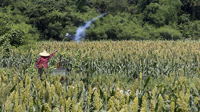 Peking: US-Überschussdumping schadet chinesischen Landwirten