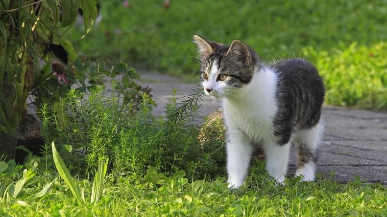 Sitze, wo ich will: Freche Katze versperrt Hunderten in Istanbul den Weg