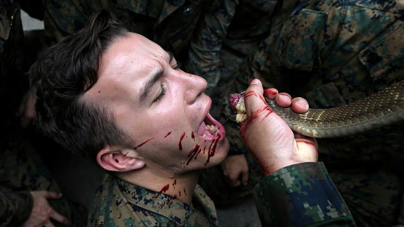 Überlebenstraining im thailändischen Dschungel für Soldaten: Schweiß, Schlangenblut und Gekkos