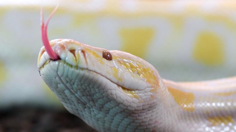 219 Schlangen in Wohnung in Buenos Aires entdeckt