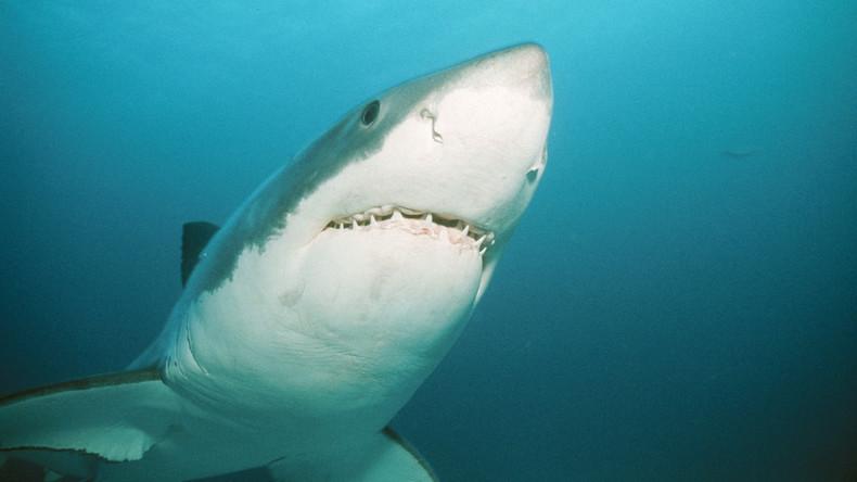 Erste Hai-Attacke bei Sydney seit 25 Jahren: Strände werden geschlossen