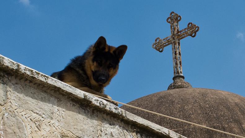 Treu bis in den Tod: Hund aus Argentinien stirbt nach elf Jahren Wache am Grab seines Herrchens