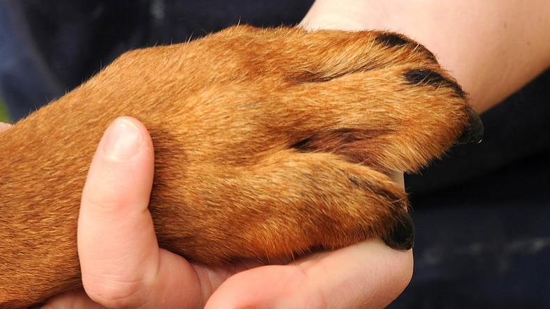 Einige haben es schwerer: Dreibeiniger Hund rettet Frauchen vor Selbstmord