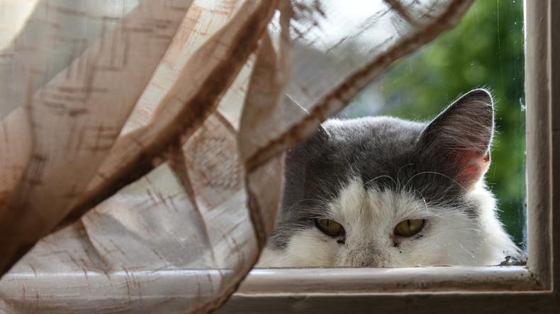 Gesichtserkennung nun auch für Katzen: Gerät lässt nicht jeden Kater rein