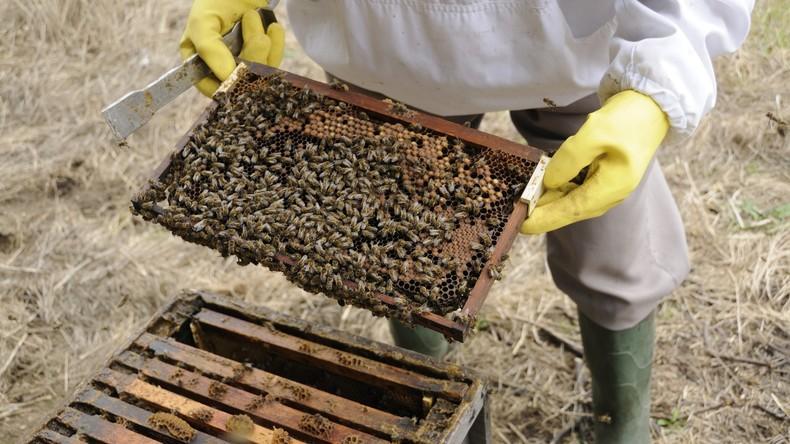 Eine Million Bienen nach Diebstahl vermisst: Imker befürchtet Bienen-Expansion in Oxfordshire