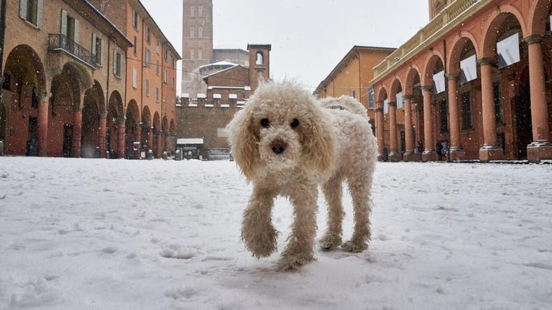 Schnee im Norden Italiens: Bologna nach heftigem Schneefall