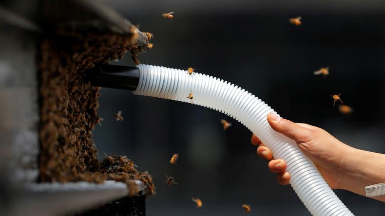 """Imkerverbände warnen vor Importbienen und wollen """"Immenbörse"""" als Mittel gegen Parasiten einrichten"""