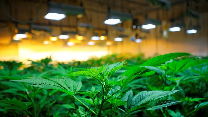 Vom Eise befreit... - Schneesturm gibt Polizei Hinweis auf Cannabis-Plantage