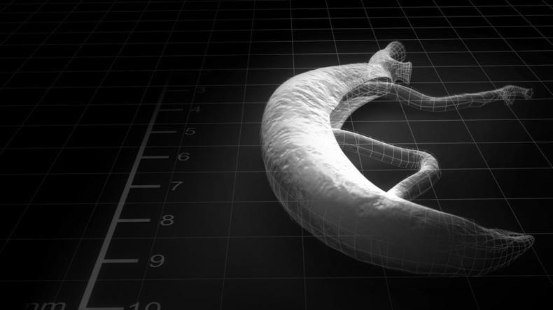 Da ist der Wurm drin: 17 Testpersonen als Wirte für todbringende Parasiten bei Suche nach Impfstoff