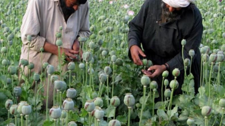 Taliban als Baumkuschler: Afghanistans Dschihadisten entdecken ihr grünes Herz