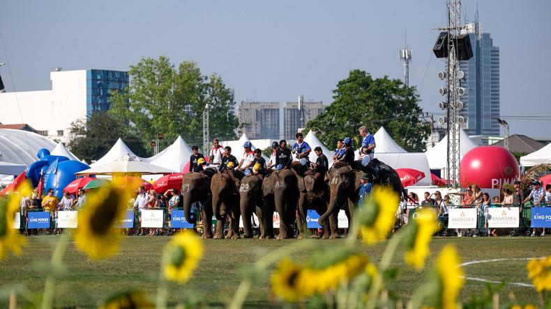 Polo mit Elefanten: Großes Turnier in Bangkok