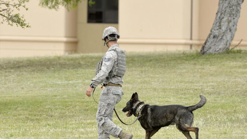 US-Armee gesteht Misshandlung von Militärhunden und gelobt Besserung