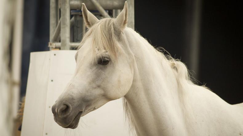 Wie ein Pferd im Nachtklub: Bar in Miami verliert Lizenz wegen durchgegangenem Ross