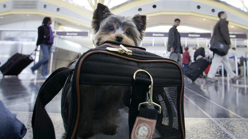 Nächster Eklat bei United Airlines: Fluglinie schickt Hund versehentlich nach Japan