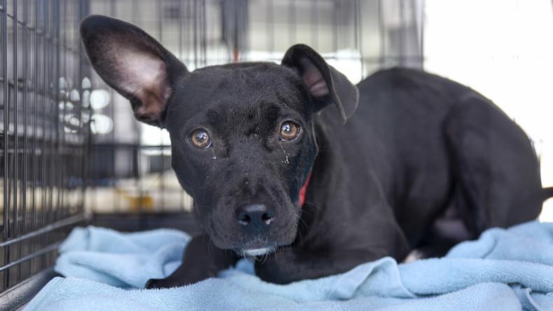 US-Passagierflugzeug muss wegen Hund an Bord vorzeitig landen
