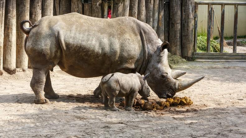 Programmbeschwerde: Nashorn-Nachwuchs für ARD wichtiger als Terroranschlag