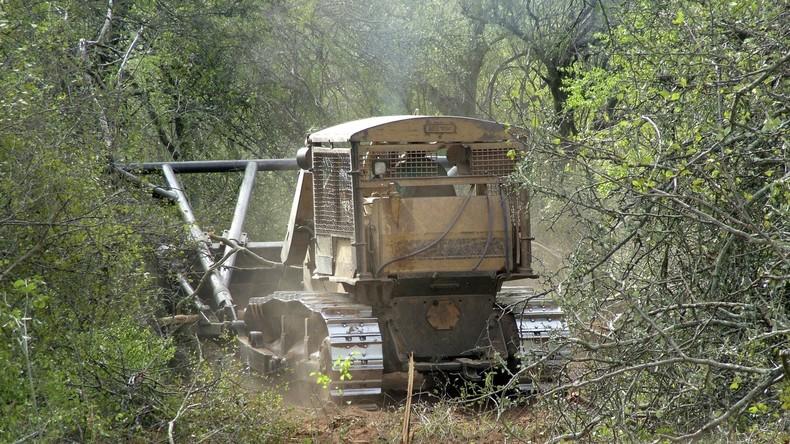 Südamerikanischer Urwald wird für deutsche Fleischproduktion gerodet