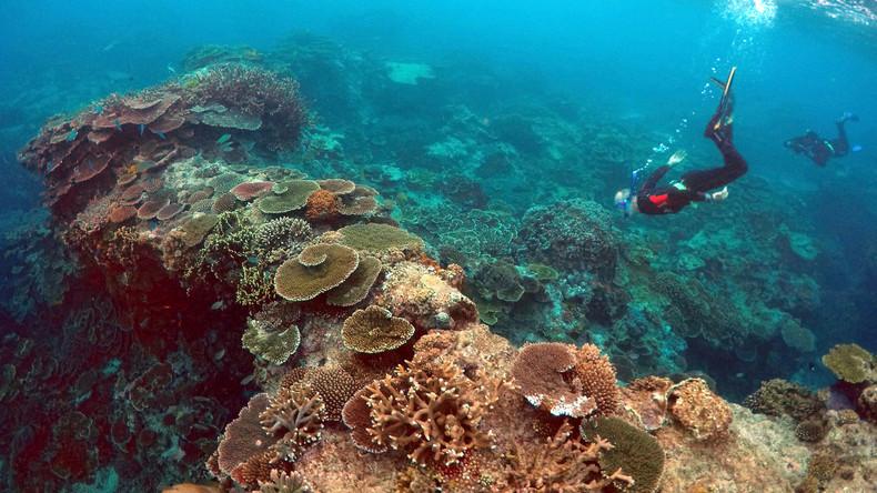 Great Barrier Reef bekommt ultradünne Schutzschicht gegen Sonnenstrahlen