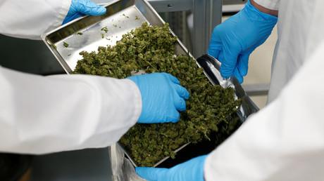 Deutschland: Nachfrage nach medizinischem Cannabis steigt rasant (Symbolbild)