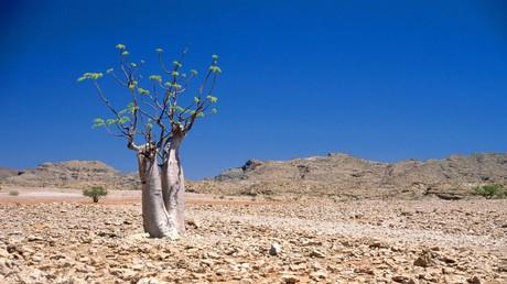 Weltbank-Bericht: Millionen droht Umsiedeln wegen Klimawandels (Symbolbild)