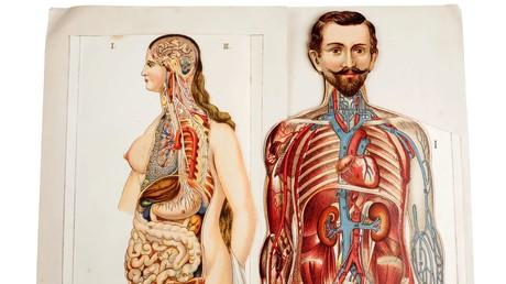 Nosce te ipsum: Wissenschaftler wollen größtes bisher unbekanntes Organ entdeckt haben (Symbolbild)