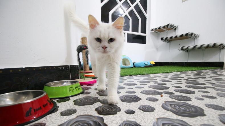 Erstmals im Irak: Student eröffnet Katzenhotel in Basra