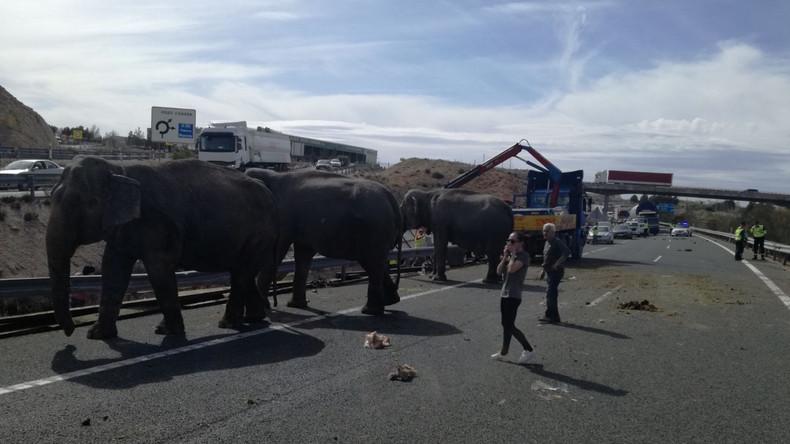 Unfall mit Elefantentransporter in Spanien kostet ein Tier das Leben