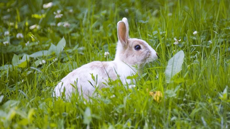 Frohe Ostern? Tierpräparator verwandelt totes Kaninchen in Toaster
