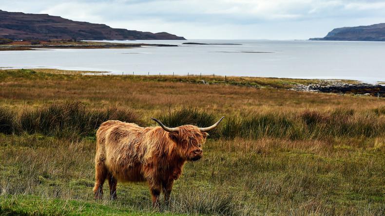 Schottland: Eine Insel steht zur Versteigerung
