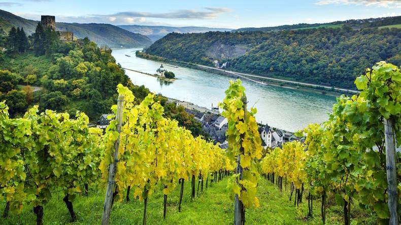 Deutsche Weinexporte nach China steigen deutlich