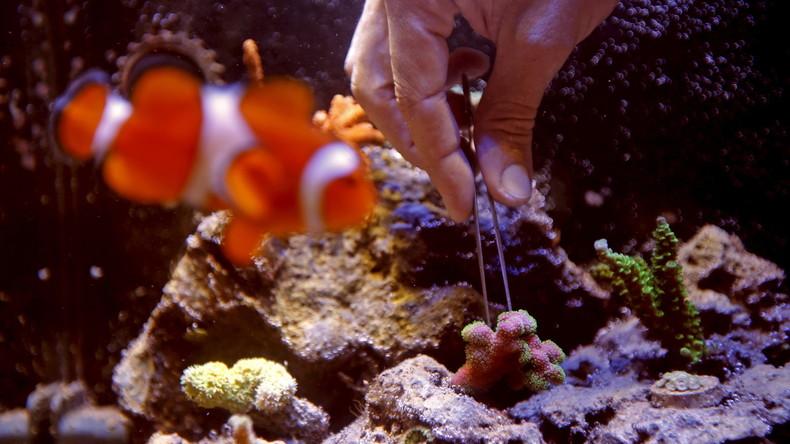 Gefährlicher Frühjahrsputz: Brite reinigt Aquarium, vergiftet sich, ganze Straße wird evakuiert