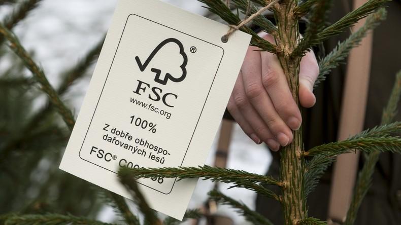 Greenpeace Deutschland verlässt FSC-Siegel für nachhaltiges Holz