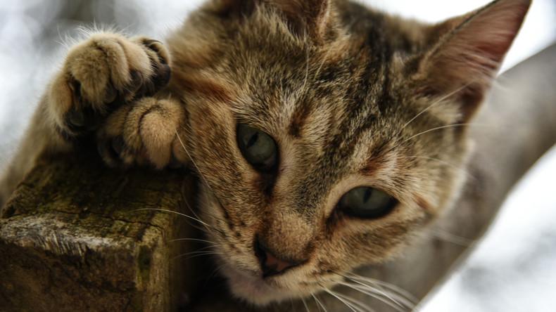 Free the Cats: Katzen bekommen Zugang zu Kellerräumen in Apartmenthäusern in Russland
