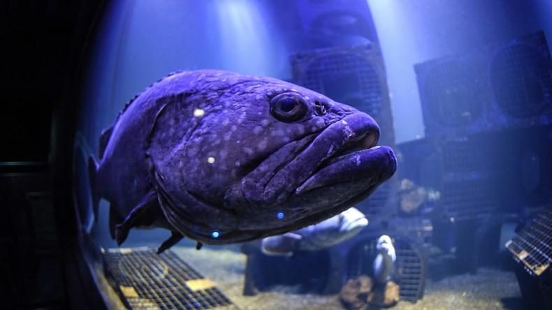 Skurriler Diebstahl in Kasachstan: Ex-Hotelmitarbeiter lässt Riesenfisch mitgehen [VIDEO]